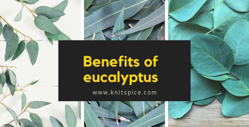 Benefits of eucalyptus